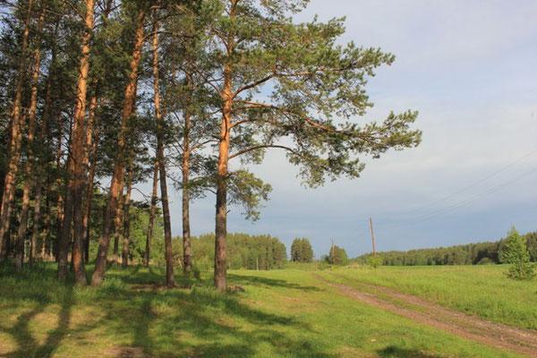 территория палаточного лагеря