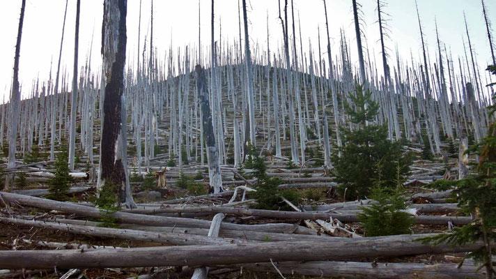 forêts brûlées