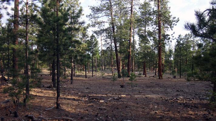 forêt avant le désert
