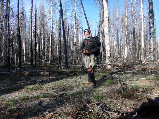 forêts brûlées à moitié noyées