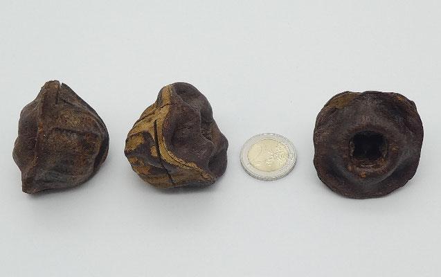 3 Kartenhalter aus Eukalyptuszapfen
