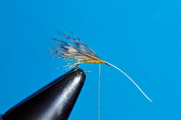Fermiamo una piumetta di pernice, una delle più piccole che riusciamo a trovare