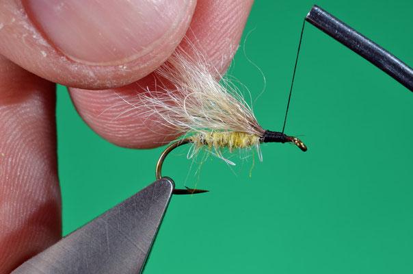 7. Posizionare l'ala e legarla al di sopra del corpo