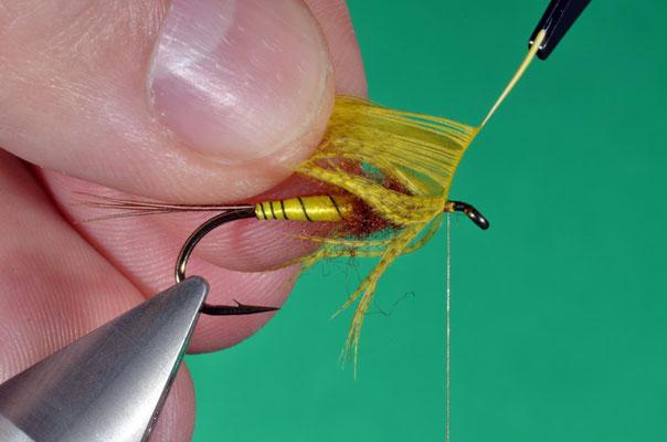 9- si avvolge la piuma di germano mantenendo le fibre all'indietro ad ogni spira