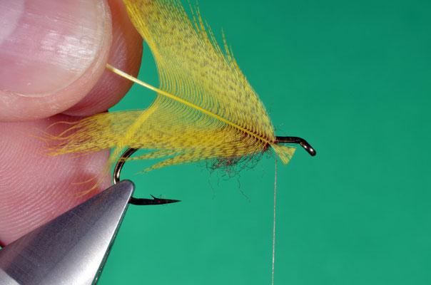 8- la piuma del petto del germano è montata per la punta
