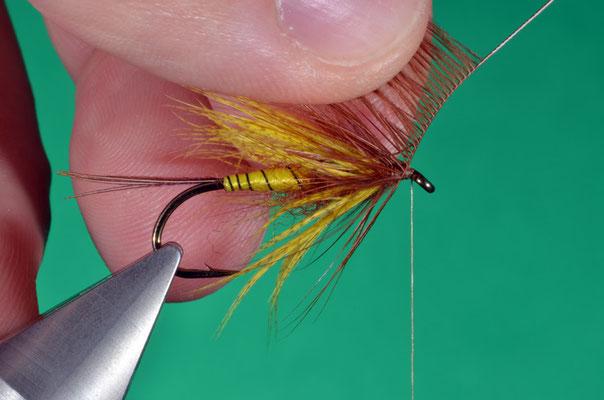 11- come per le fibre di germano, si avvolge l'hackle cercando di far disporre le fibre all'indietro