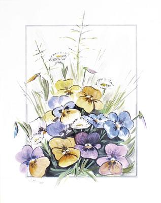 Stiefmütterchen, 50 x 40 cm, Aquarelle