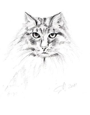 Katze,  17 x 24 cm, Skizze in Bleistift