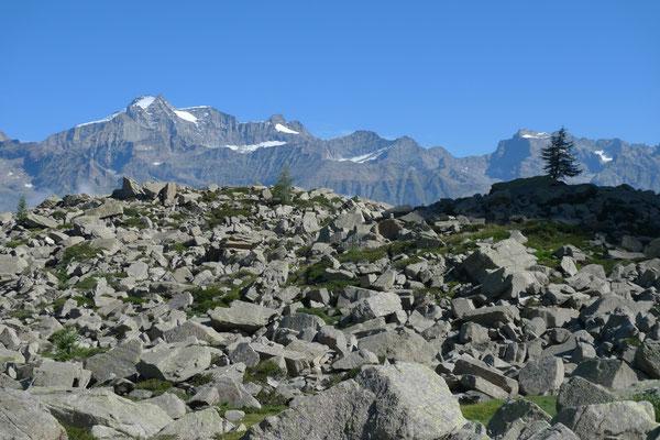 Blick vom Colle Crocetta zum Gran Paradiso