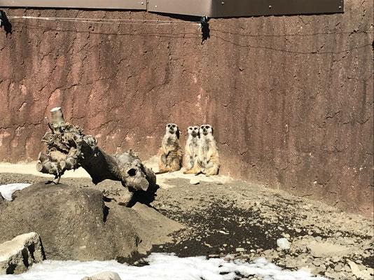 DOG SALON SEALY ドッグサロンシーリー 港区 表参道 神宮前 南青山 外苑前 トリミングサロン 射手今日子 トイプードル