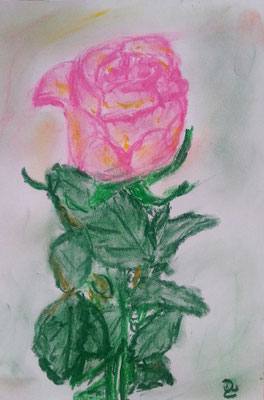 Rosa rosae Pastellkreide auf Papier 10 x 15  50,-