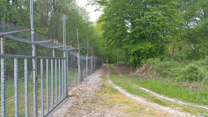 Eléctrifiées sur 3 niveaux, d'une hauteur de 3,5 m les clôtures des volières anglaises protègent le gibier contre les prédateurs terrestres.