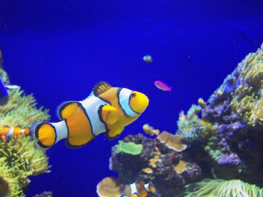 S.E.A. Aquarium auf der Vergnügungsinsel Sentosa - das größte Aquarium der Welt.
