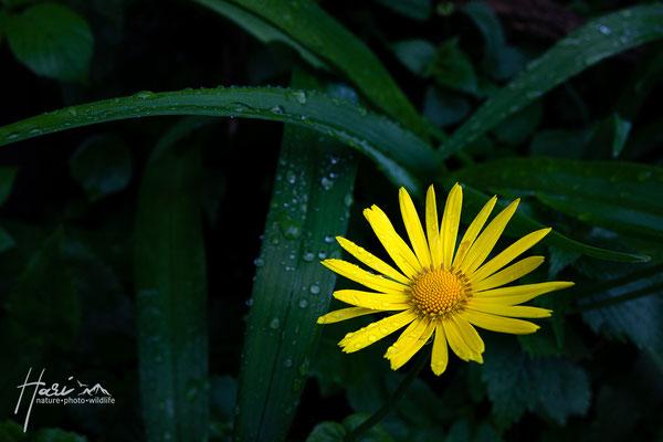 Sonnenstrahl nach Regen
