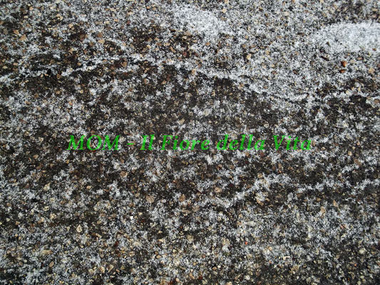 texture 051