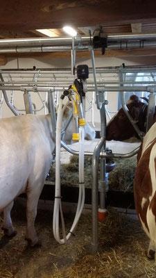 Melkeinheit mit Einhand-Bedienung, elektrischem Pulsator und BioMilker Melkzeug
