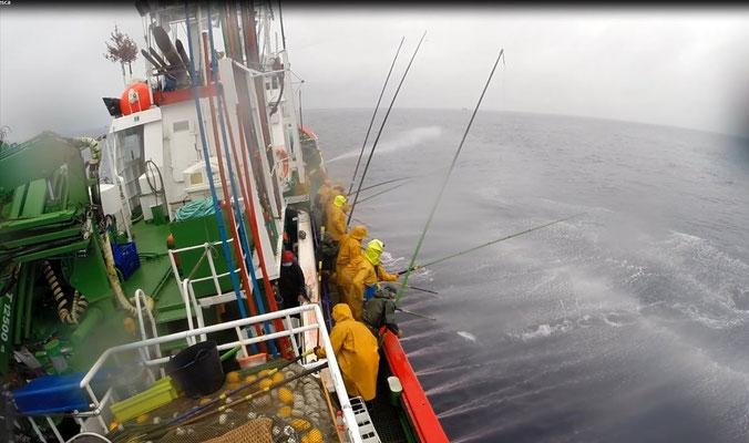 Pescando bonito del norte a caña