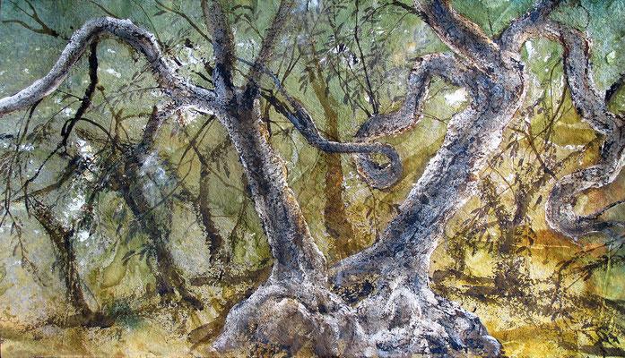 Olivenhain in Umbrien, 2019, 90 x 160 cm, Tusche und Acryl auf Papier auf Leinwand