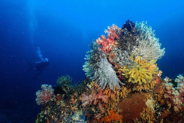 Coral Reef at Twin Rocks