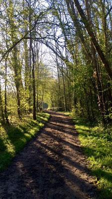 Chemin entre le moulin de Richenou et Baglainval