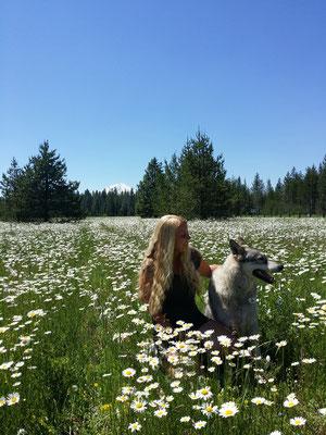 Vor Mt. Shasta mit einem Timberwolf