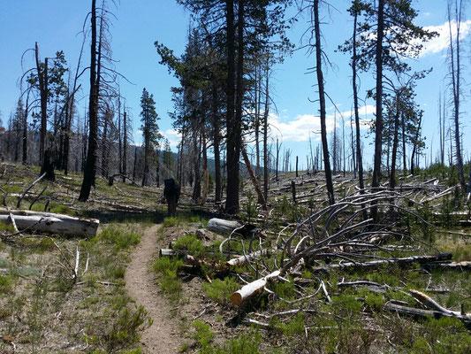 Lassen National Park nach einem Waldbrand