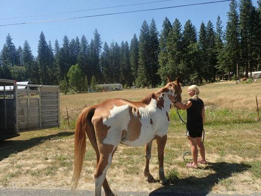 Auf Terrys Ranch