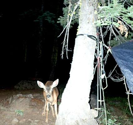 Rehbesuch in der Nacht