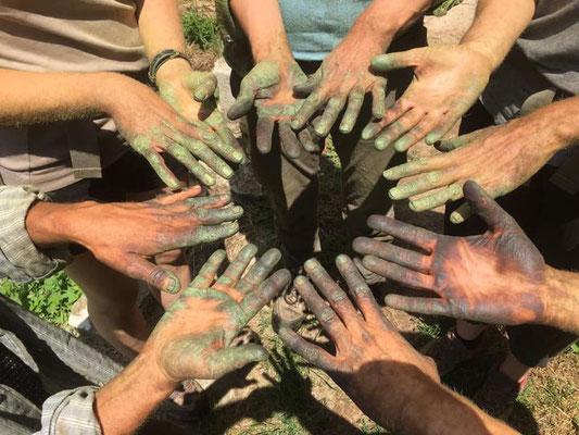 Les mains d'une partie de l'équipe des Jardins du Treille noircies par la taille des pieds de tomates