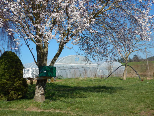 L'exploitation maraîchère au printemps