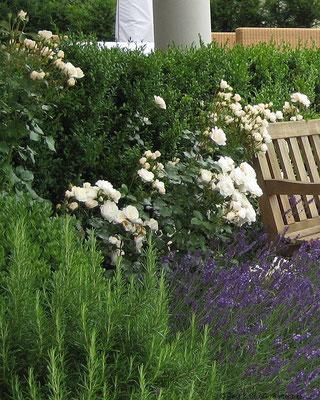 Rosen und Lavendel, eine Kombination die passt