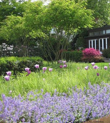 Tulpen, Stauden und Formgehölze