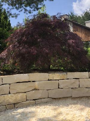 Jurakalk-Kleinmauersteine mit rotem Ahorn
