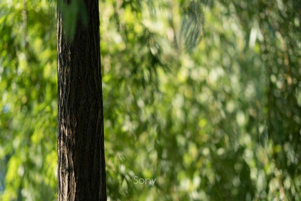 Samyang AF 85mm 1.4 FE vs. Sony 85mm 1.4 GM, Bokeh @f/1.4 #2