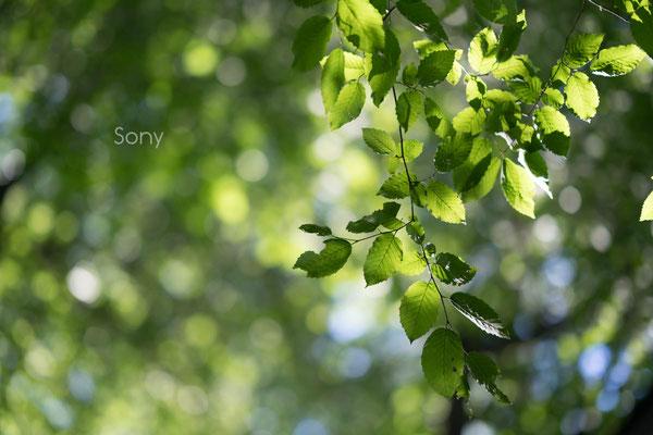 Samyang AF 85mm 1.4 FE vs. Sony 85mm 1.4 GM, cat eyes