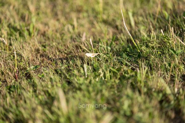 Samyang AF 85mm 1.4 FE, Bokeh @ f/1.4