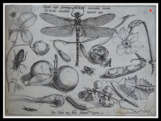 """DOMINUS ARTEM"" Joris Hoefnagel 1592, Kupferstich, Blattgröße 16,5cm x 21,5cm  - VERKAUFT"