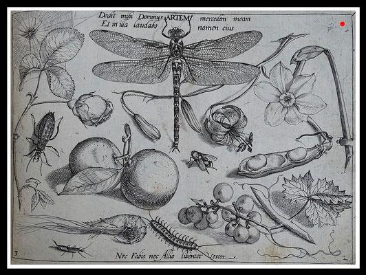 "Joris Hoefnagel 1592, ""DOMINUS ARTEM"", Kupferstich, Blattgröße 16,5cm x 21,5cm  - VERKAUFT"