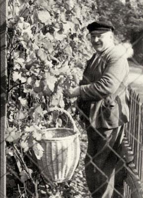 Curt Biedermann bei der Weinlese, 1930er Jahre, Quelle: Familie Biedermann, Mauna