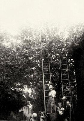 Bei der Ernte - hertha Biedermann mit Kindern, 1930er Jahre, Quelle: Familie Biedermann, Mauna