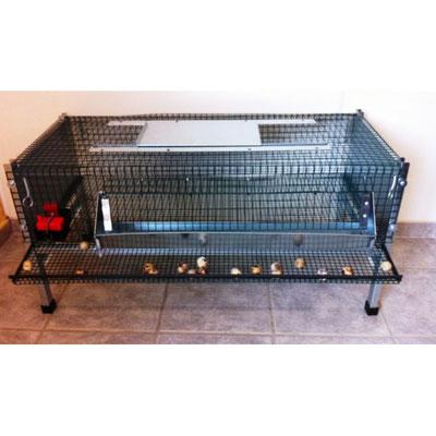 Cage cailles reproductives - Avec mangeoire et abreuvoir automatiques - 1000 x 600 x 500 H