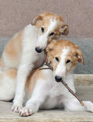 Xheva and Xara