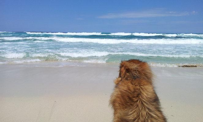 Blick auf die Wellen der Cala Mesquida