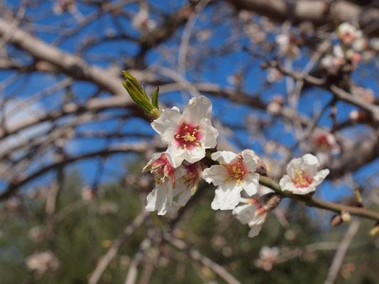 Frühjahr auf Mallorca