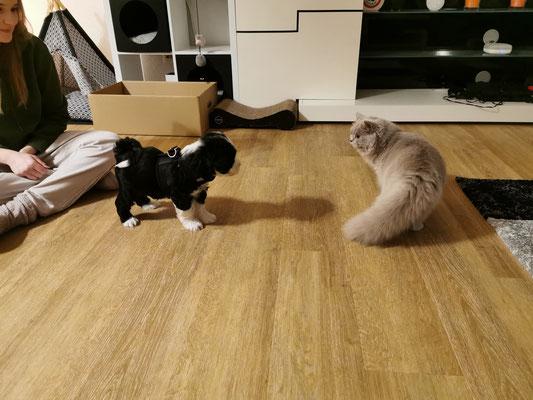Amanda's & Dominik's Katzen besucht