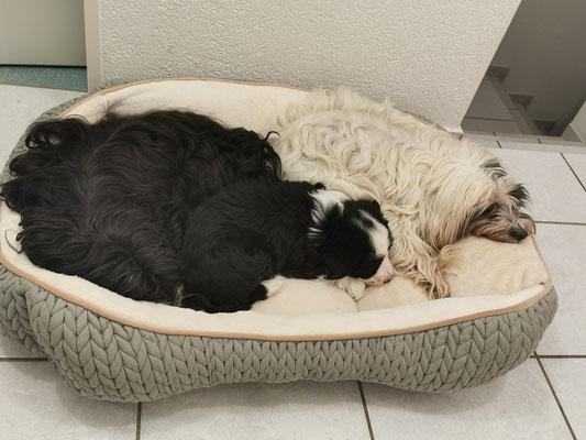 Zum Glück haben wir grosse Bettli. Platz für fast alle.