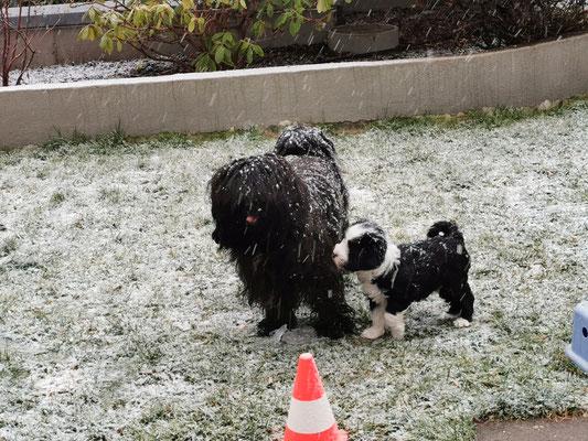 Erster Schnee zusammen mit Im-chi