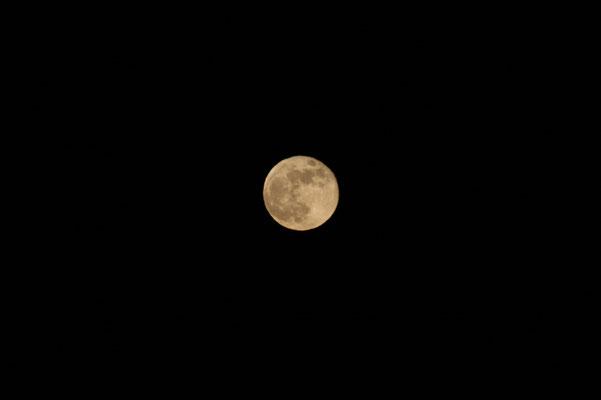 11 janvier 2009 - plein lune