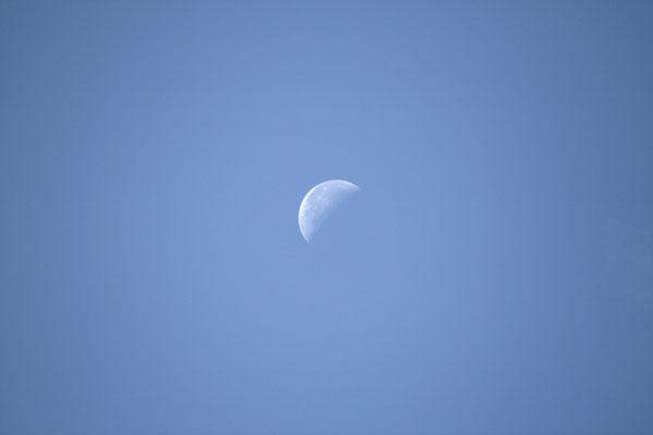 18 août 2014 - la lune au matin (bien avancé ...)