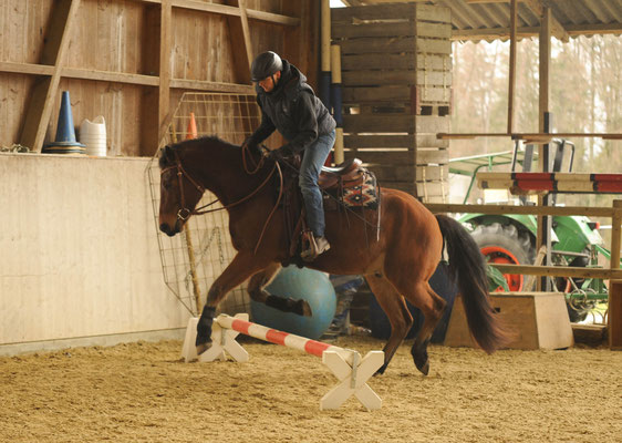 Working Equitation Kurs